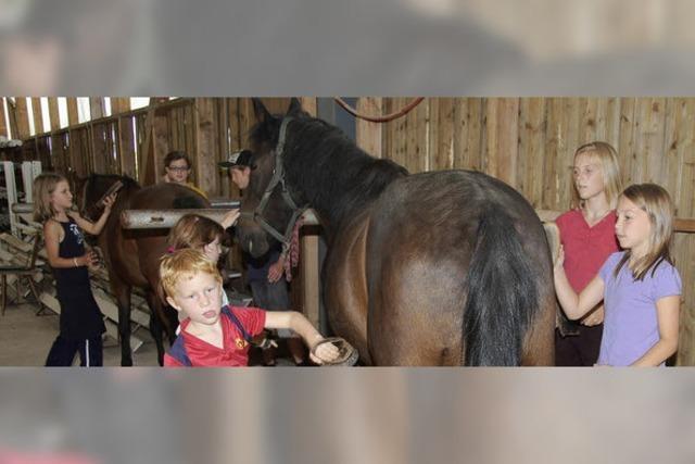 Ein Ferientag rund ums Pferd
