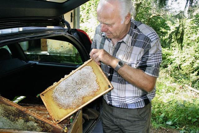 Den Bienen fehlt es an Nahrung