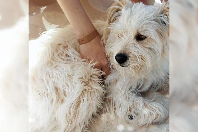 Viel Engagement für kleinen Hund aus Tunesien