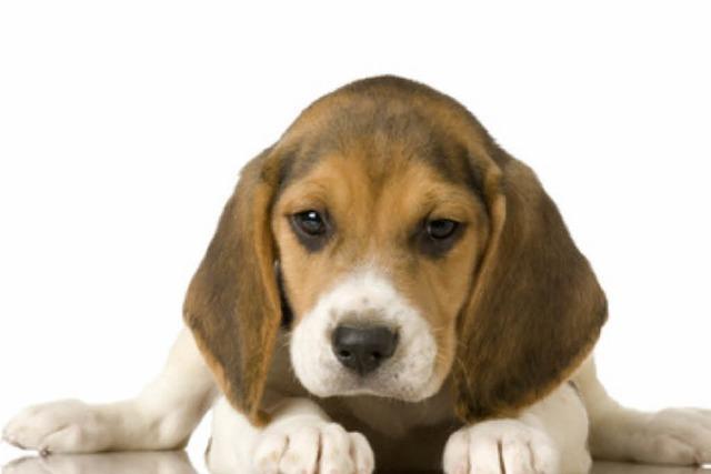 Tierschutz lässt Hundewelpenhändler bei Waldshut auffliegen