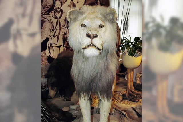 Der Löwe Tür an Tür mit Aenne