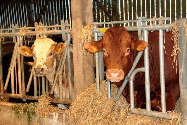 Bretonische Milchbauern streiken