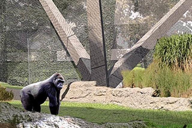 Mehr Platz zum Toben für die Affen