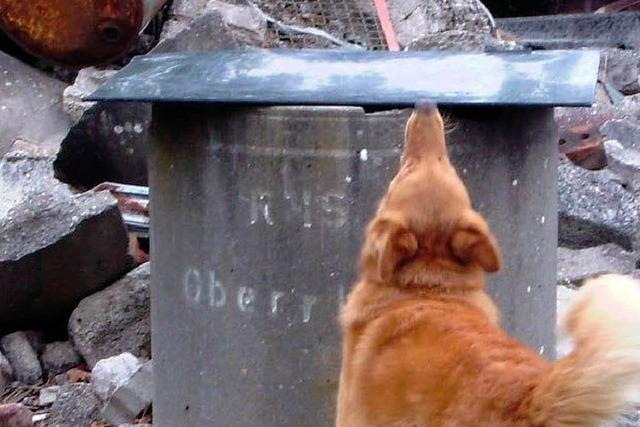 Rettungshundestaffel darf Ruine bauen
