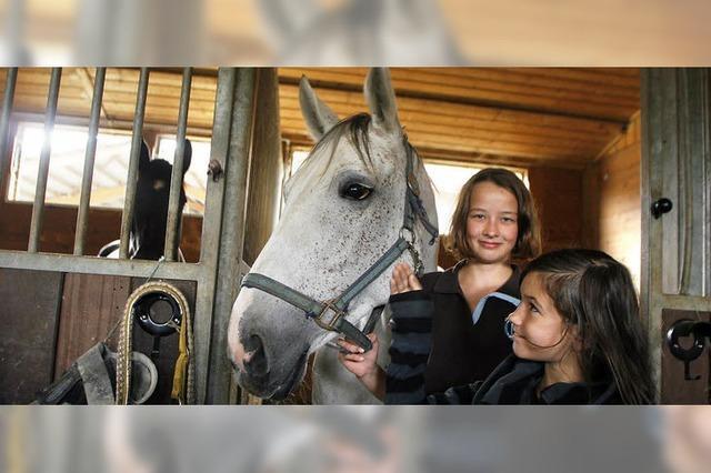 Wie sich die Pferde unterhalten