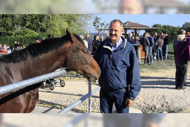 Eintauchen in die Welt der Pferde