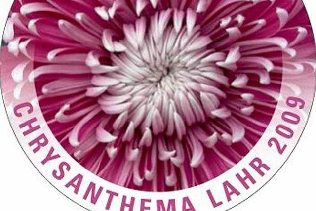 Der Anstecker zur Chrysanthema