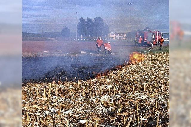 Maisfeld stand in Flammen