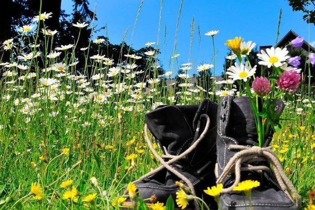 Achtung Pflanze! Das Gänseblümchen