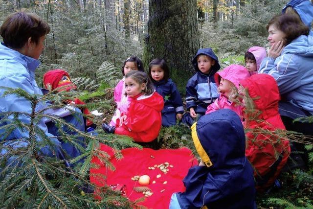 Märchenhafte Erlebnisse im Wald