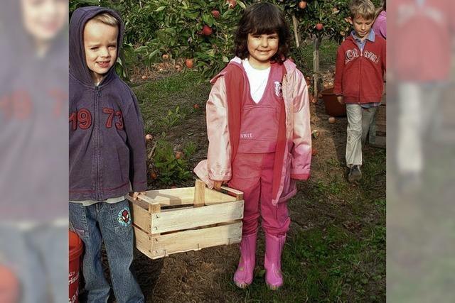 Eine Kiste voller Äpfel
