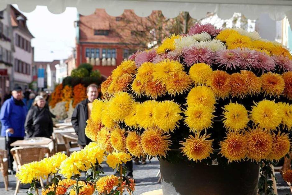Impressionen vom zweiten Chrysanthemen-Wochenende (Foto: breithaupt)