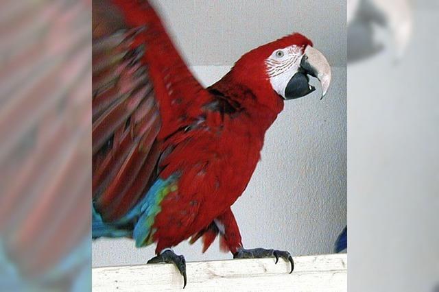 Wer ist der schönste Vogel im Land?