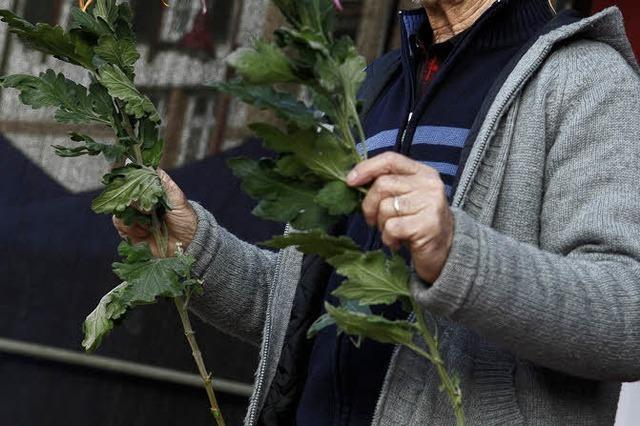 Der Schweizer Züchter Hansruedi Thommen weiß alles über die Chrysantheme