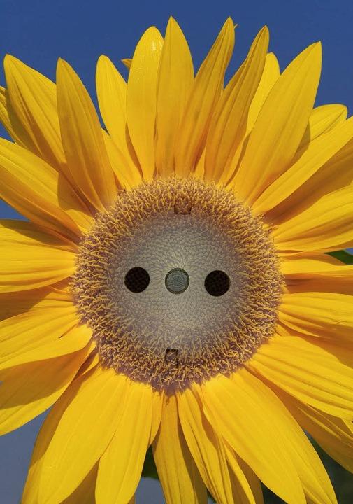Strom aus Bioenergie und Sonne: Mit de...rer Schritt in diese Richtung gemacht.  | Foto: fotolia