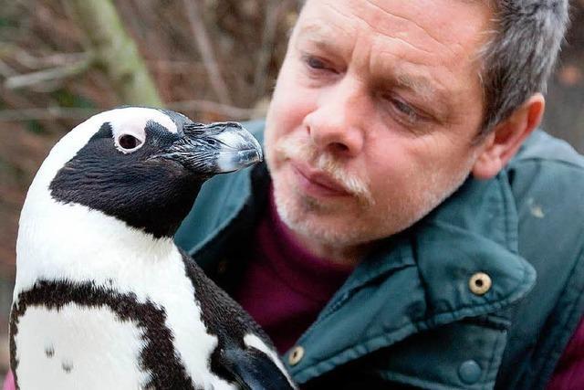 Pinguindame Sandy verliebt – in ihren Pfleger