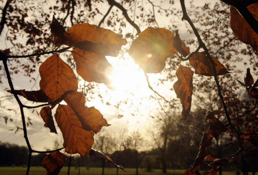 Der Herbst zeigt sich momentan von seiner milden Seite (Symbolbild).  | Foto: ddp