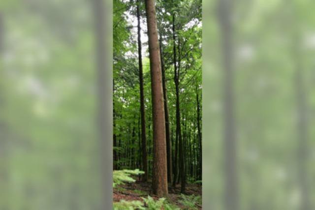 Streit um den Holzeinschlag