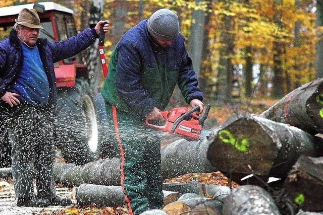 Krise betrifft auch die Forstwirtschaft
