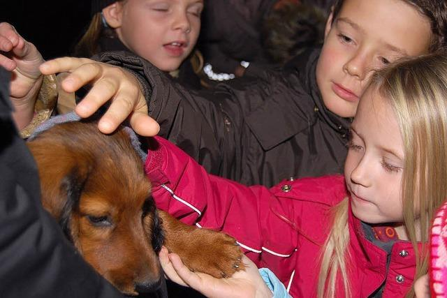 Schulstunde mit Hunden