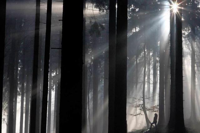 Der Klimawandel setzt dem Wald zu
