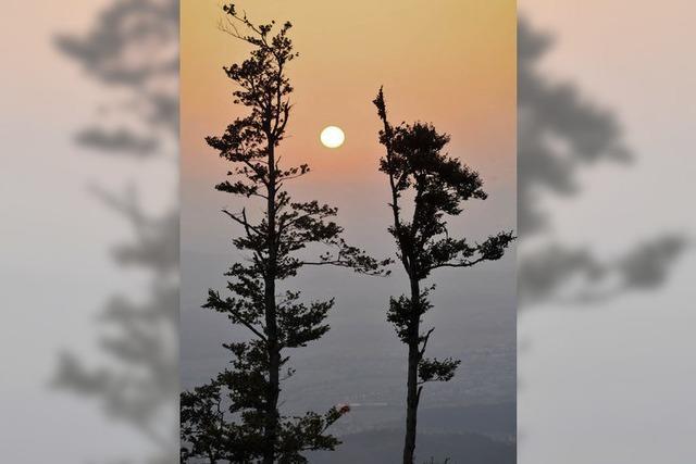 Das Klima braucht andere Bäume