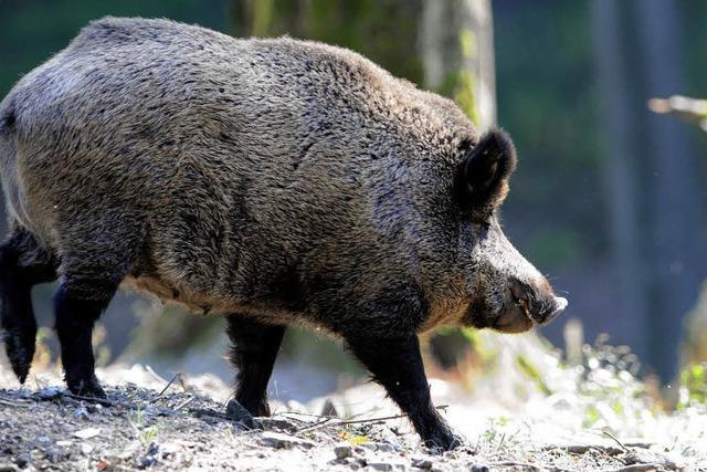 Jäger, Treiber und kein Wildschwein