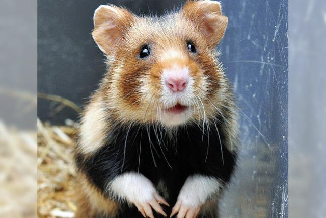 Kein Herz für Hamster