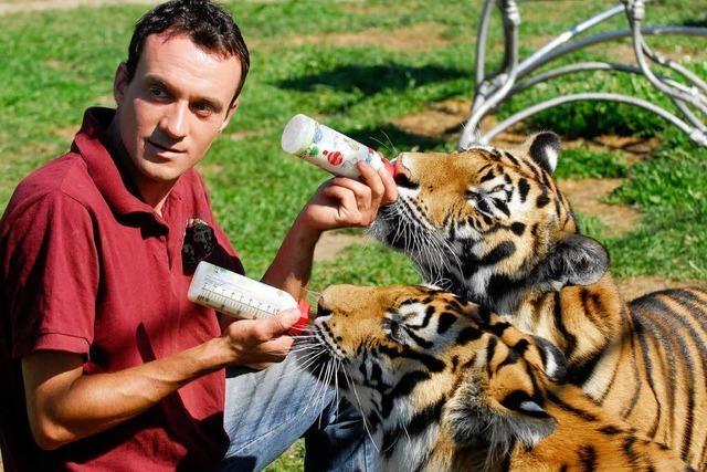 Schwer verletzter Tiger-Dompteur war der Star am Freiburger Mundenhof