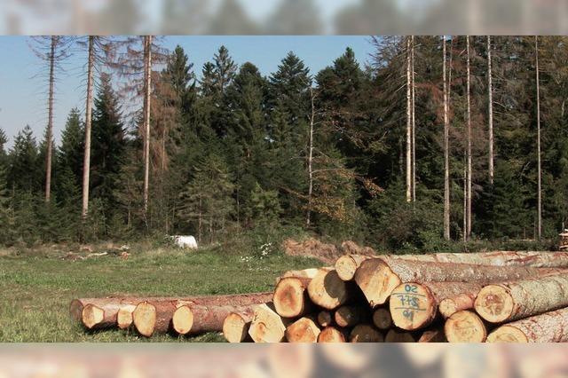 Klima macht dem Wald zu schaffen