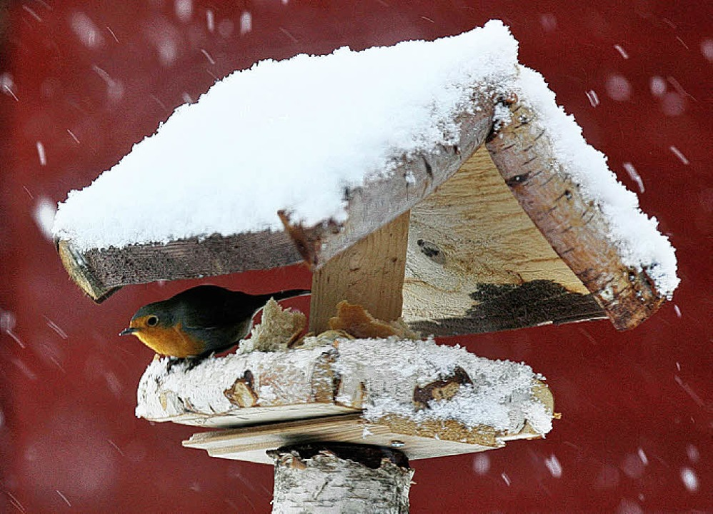 Ungemütlich kann es im deutschen  Wint... Dach über dem Kopf manchmal willkomme  | Foto: dpa/dpaweb