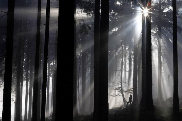Staufener Wald erbringt Gewinn