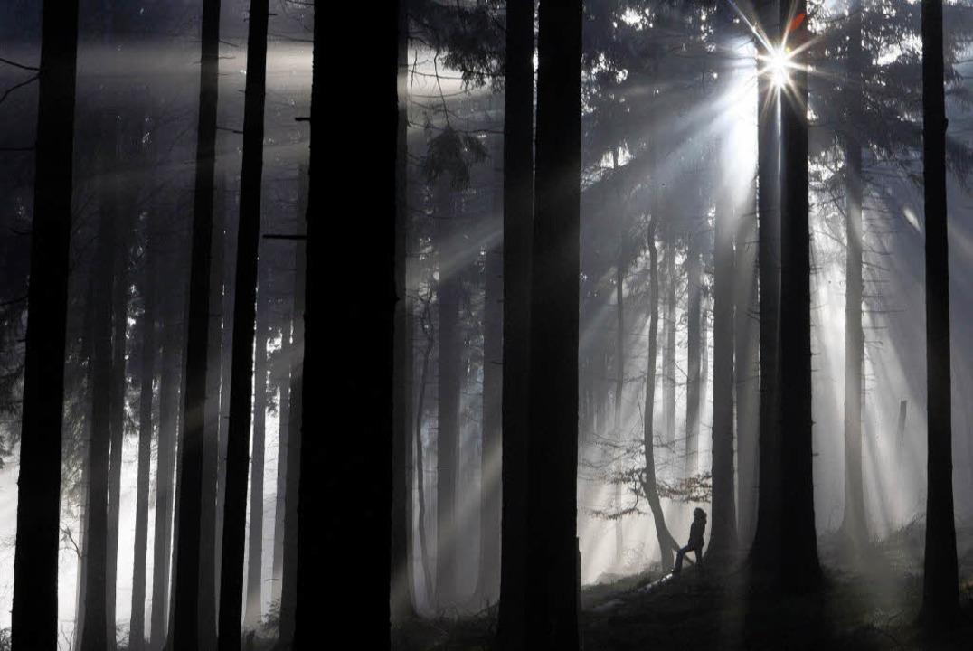 Der Staufener Wald erbrachte für das Wirtschaftsjahr 2008 120000 Euro Gewinn.     Foto: dpa
