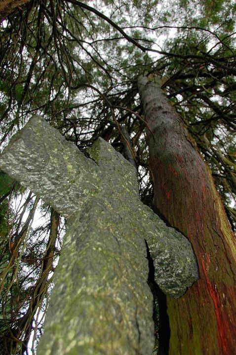 Impressionen: Der Au-Friedhof in Bad Säckingen    Foto: Krug