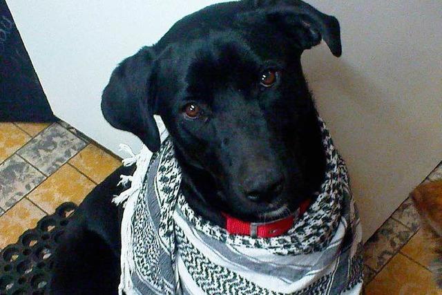 Entführter Hund verzweifelt gesucht