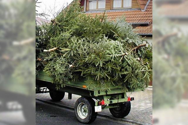 Erster Termin ist die Christbaumabfuhr