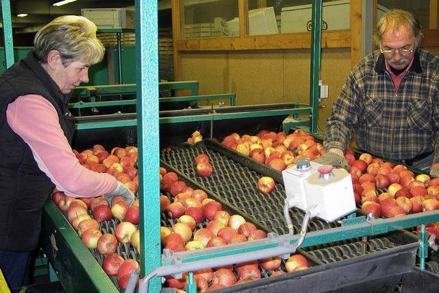 Tonnen von Äpfeln warten auf Käufer