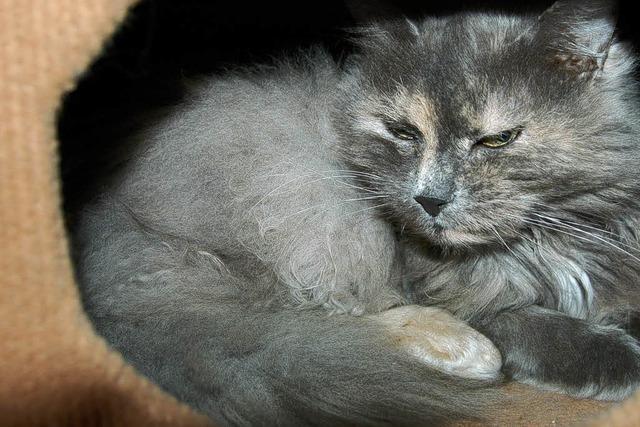 Tierschutzverein richtet Auffangstation für Katzen ein