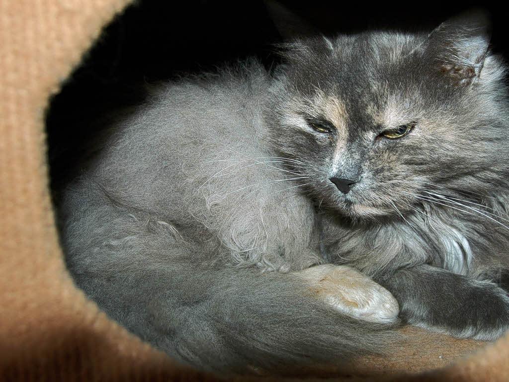 tierschutzverein richtet auffangstation f r katzen ein m llheim badische zeitung. Black Bedroom Furniture Sets. Home Design Ideas