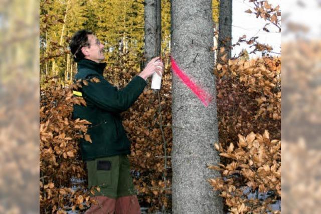 Forst bleibt unter dem Planansatz