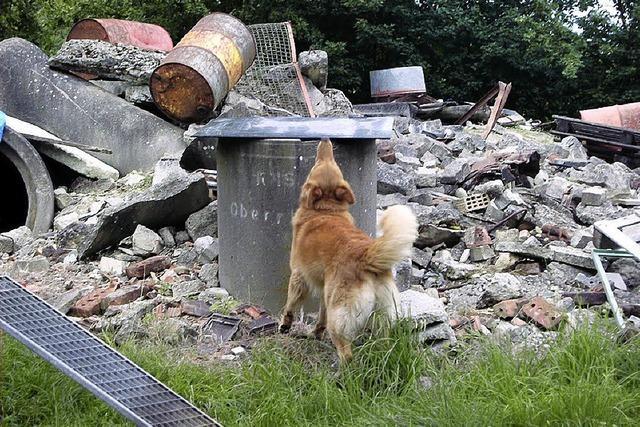Haiti zeigt Bedeutung der Rettungshunde
