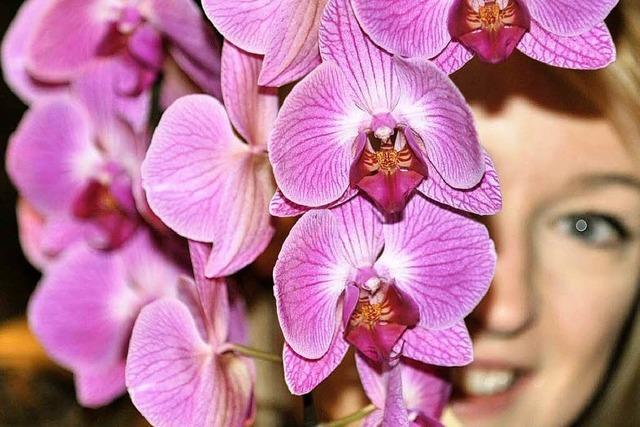 Orchideenausstellung im Lahrer Stadtpark