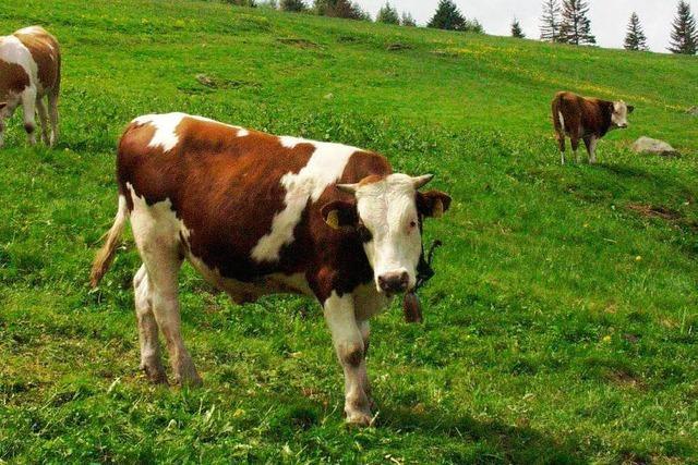 Fichten statt Milchkühe