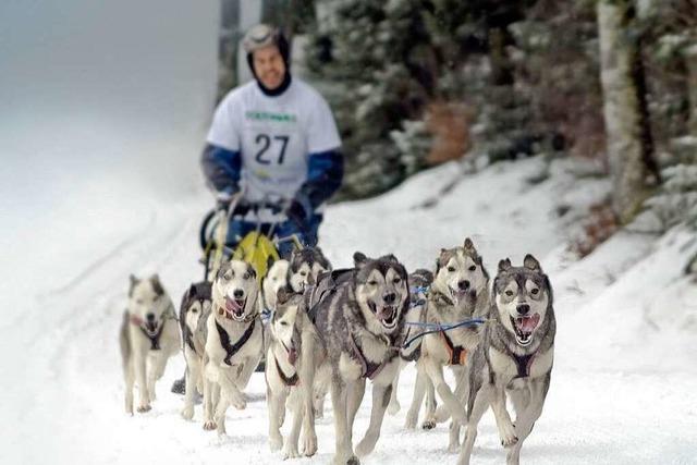 Todtmoos, Samstag/Sonntag: Schlittenhunde laufen wieder