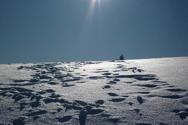 Einer der kältesten Wintermonate rund um Ettenheim