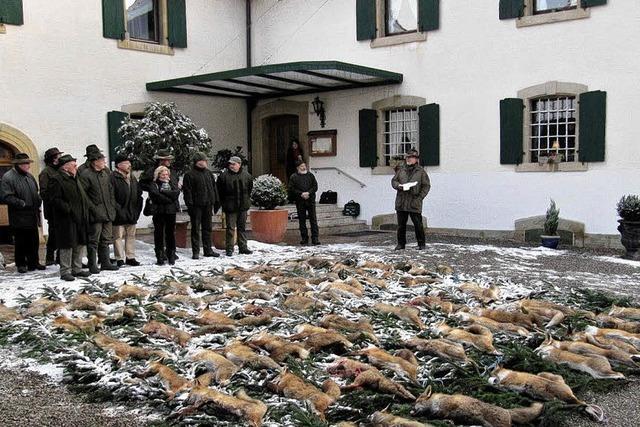 Hohe Fuchszahl zwingt zur Jagd