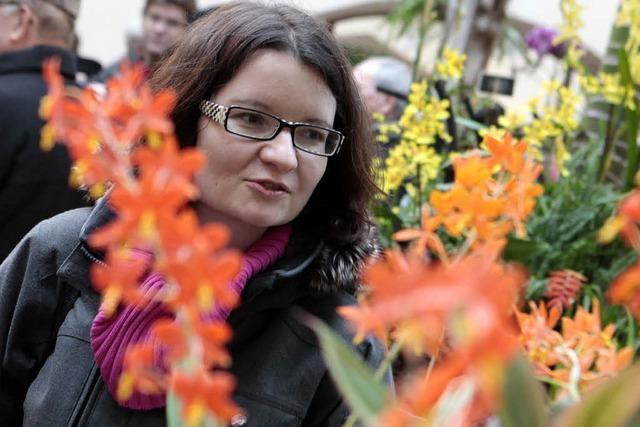 Orchideenschau in Lahr