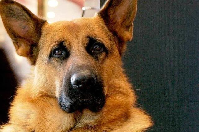 Hundestreit: Renitenter Rentner kommt in Beugehaft