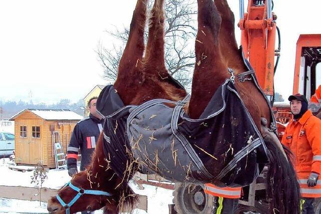 Pferd stürzt in alte Jauchegrube