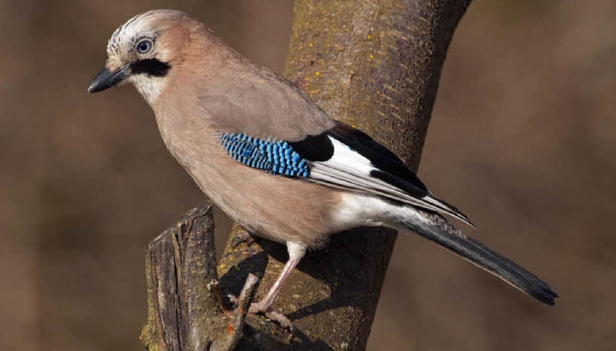 Krächzender Vogel
